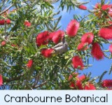 thumbnail-link-to-site-page-on-the-botanic-gardens-cranbourne