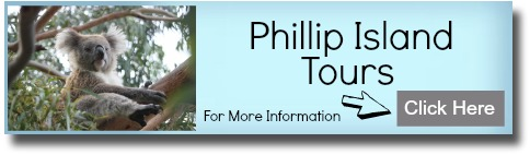 Banner graphic to link to Phillip Island Tours