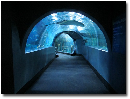 Viewing tunnel Melbourne Aquarium Melbourne Australia compliments of http://www.flickr.com/photos/jupiterfirelyte/6927303239