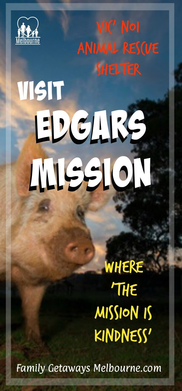 Edgars Mission animal rescue shelter pin for Pinterest