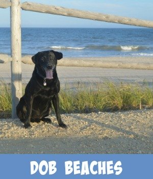 thumbnail link to site page for dog friendly beaches