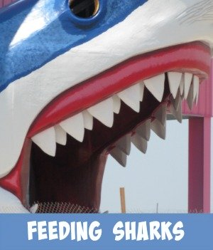 Image link to site page of feeding the sharks