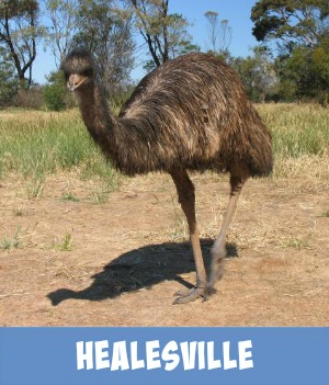 image link to site page on Healesville Sanctuary