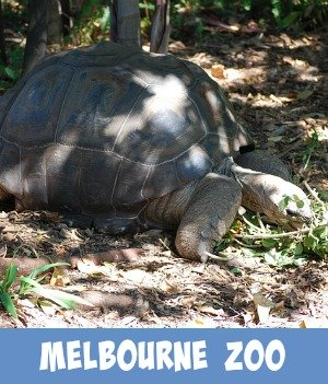 image link to site page on Melbourne zoo