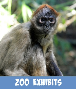 thumbnail link to site page on Zoo Exhibits