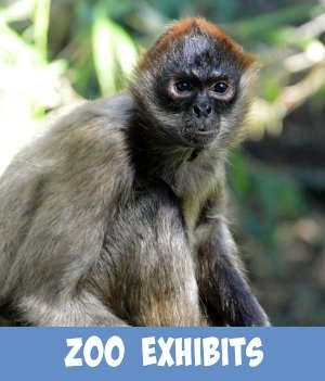 image link to site page on zoo exhibits