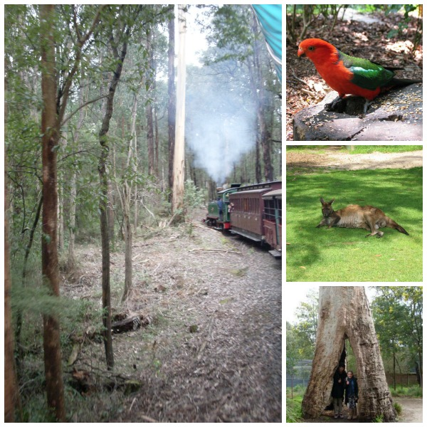 Viator Puffing Billy and Healesville Sanctuary tour