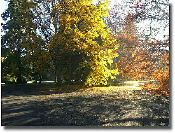 Last of the autumn leaves in Marysville, Melbourne - Australia compliments of Steve Curle