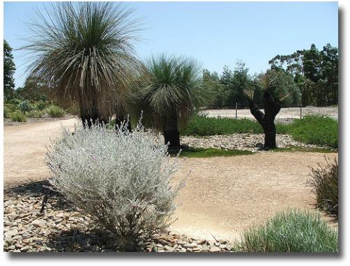 Emu bush and Black Boys Cranbourne Botanic Gardens Victoria compliments of http://www.flickr.com/photos/sneedleflipsock/2184048331/
