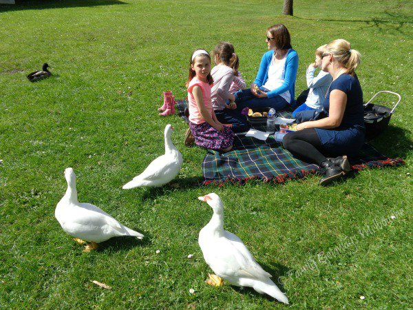 Picnic with the ducks at Coal Creek Heritage Village