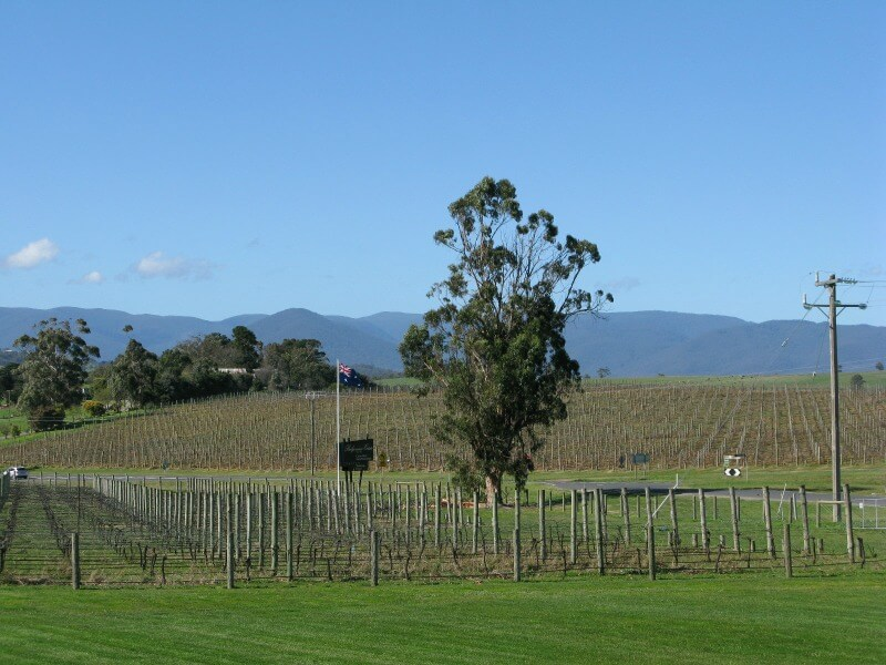 winery at base of dandenong mountains compliments of https://flic.kr/p/jAAEe5