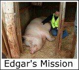 Gallery thumbnail for Edgars Mission and Animal Sancuary