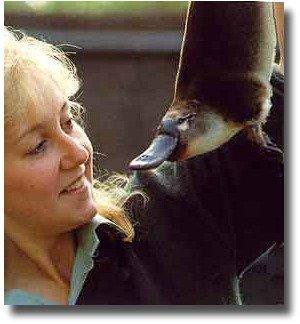 healesville sanctuary platypus