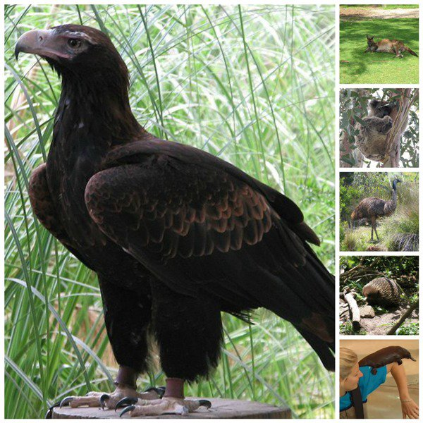 Selection of wildlife at the Healesville Sanctuary