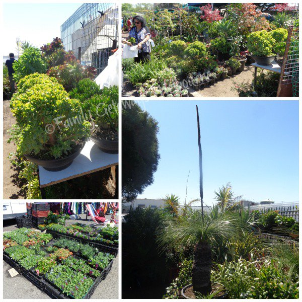 Plants for sale at the Laverton Market