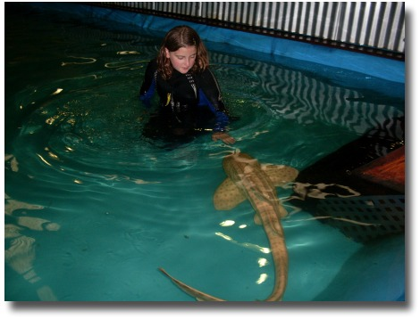 Australian Shark and Stingray Centre Leopard Shark