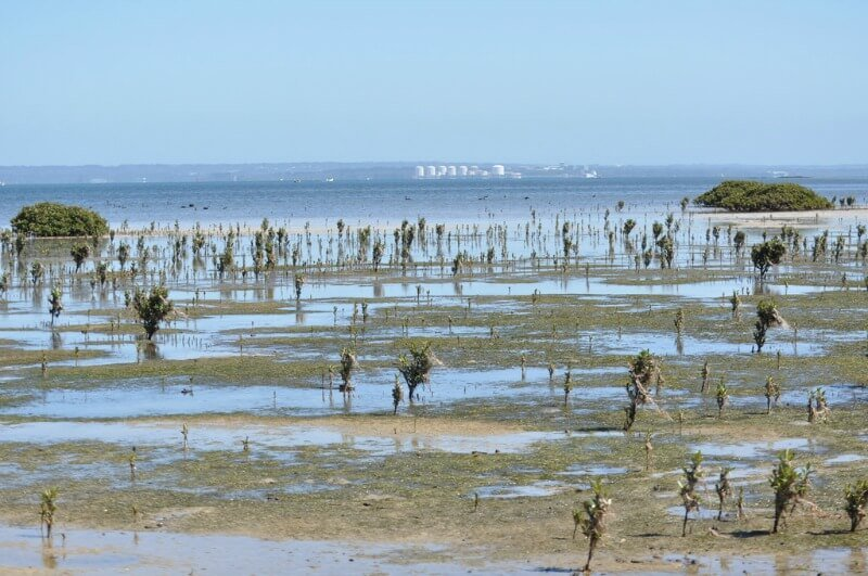 Mangroves on French Island compliments of https://flic.kr/p/7v8zQE
