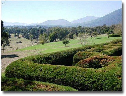 The Giant Cyprus Hedge Maze Hedgend Maze Healesville Victoria Australia