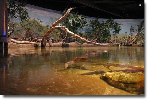 The rock pool displays at the Melbourne Aquarium compliments of http://www.flickr.com/photos/jbennett/26284246/