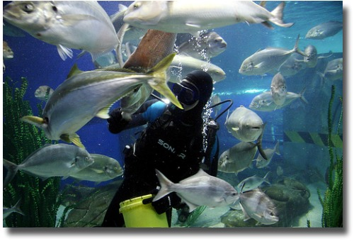 Feeding the fish at the Melbourne Aquarium compliments of http://www.flickr.com/photos/reinis/383412238/