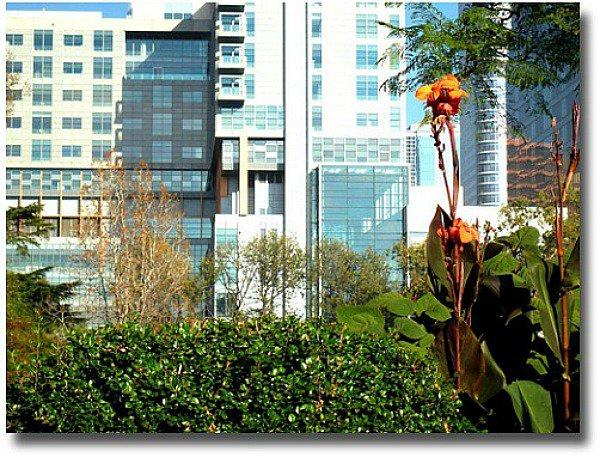 Canna Lilies against blue sky, Melbourne - Australia compliments of http://www.flickr.com/photos/d-l-j-h/498014258/