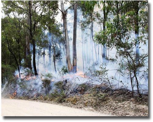 Bushfire in the Dandenong Ranges