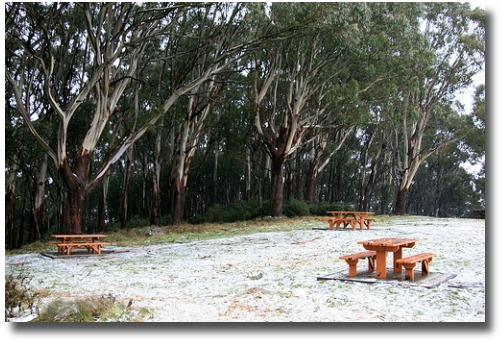 The top of Mt Donna Buang covered in snow during late June in 2007 compliments of http://www.flickr.com/photos/splatt/3250381050/in/photostream/