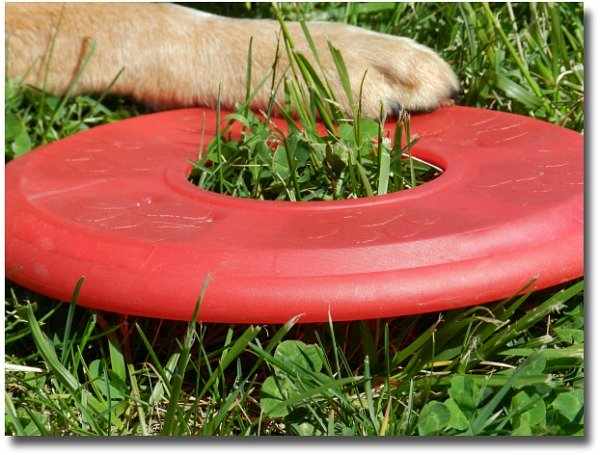 Play Frisbee with the family dog in the park