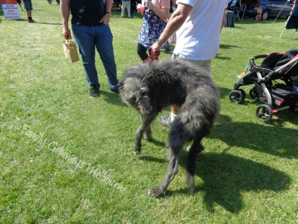 Dogs are allowed at the Queenscliff Community Market