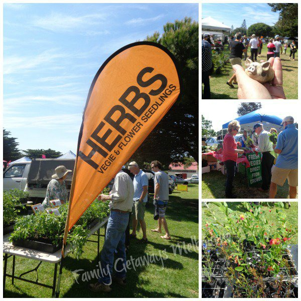 Plants, herbs, seedlings and fresh vegetables selling at the Queenscliff Community Market
