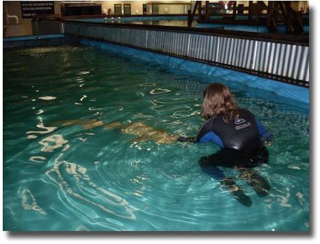 Stroking the Leopard Shark at the Australian Shark and Stingray Centre