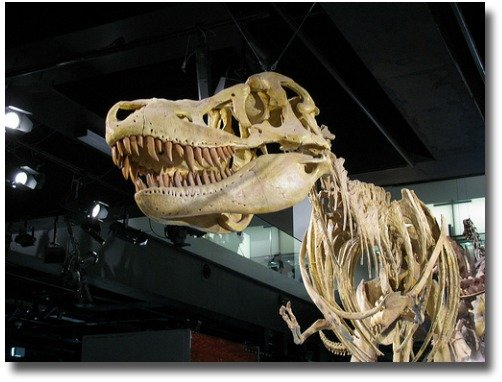 Tyrannosaurus Rex Skeleton at the Melbourne Museum compliments of http://www.flickr.com/photos/holidaypointau/8019131341/