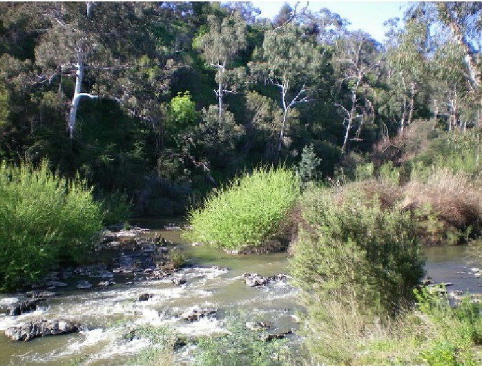 Yarra River Rapids - Westerfolds Park