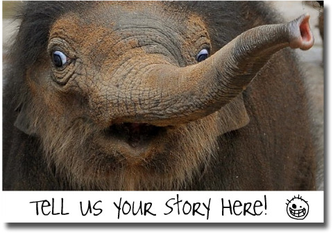 Zoo Elephant invites you to share your Zoo stories
